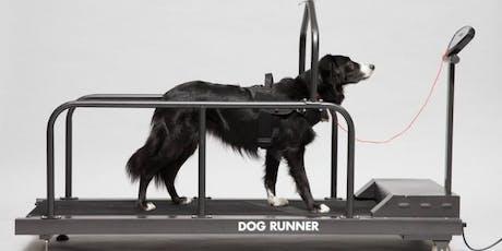 Gebruik van de loopband: Laat je hond bewegen of sporten tickets