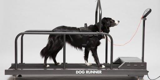 Gebruik van de loopband: Laat je hond bewegen of sporten