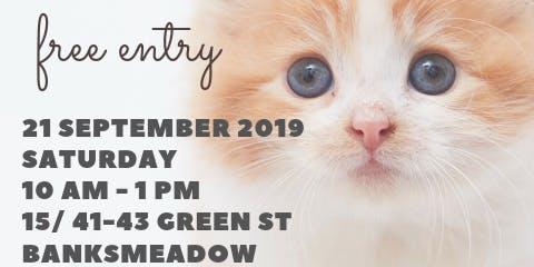Adoption Day - Urban Kittens