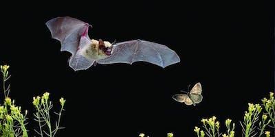 Bat Walk at Headstone Manor Park