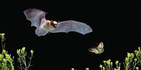 Bat Walk at Headstone Manor Park tickets