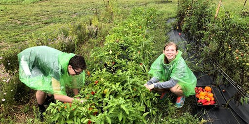 Volunteer Day at Bellwether Farm