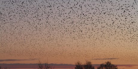 Dawn Explosion Walk at RSPB Ham Wall tickets