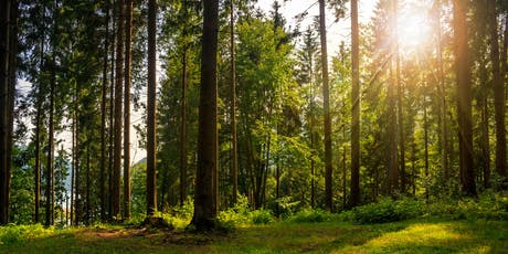 Mindfulness in Nature Half-day Retreat tickets