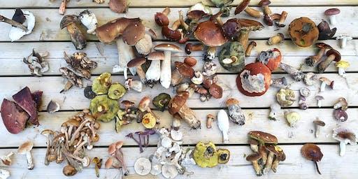 Fun Fungi Foray in Jordans