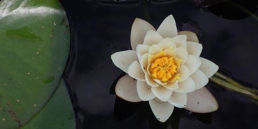 Morning meditation - 15/10/19