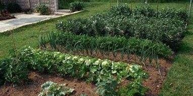 Organic No-Till Vegetable Gardening - SOLD OUT