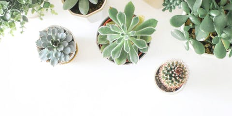Succulent Bar by The Modern Planter