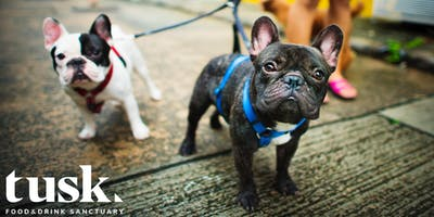 Doggy Social: Winter Party