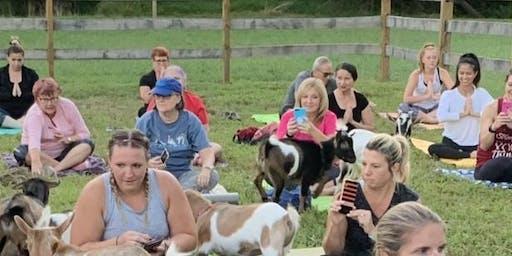 Goat Yoga on the farm