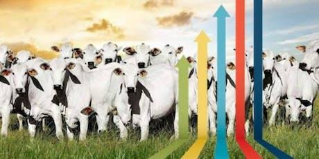Painel Conecta Agronegócio: Inovação Tecnológica  na Pecuária de Corte ingressos