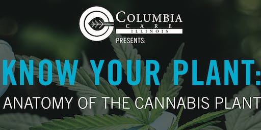 Know Your Plant: Anatomy of the Cannabis Plant