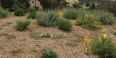 Rancho La Costa Grassland Restoration Event