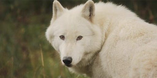 Environmental Film Festival Fall Spotlight: THE TROUBLE WITH WOLVES