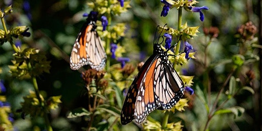 MONARCH BUTTERFLY RESERVE