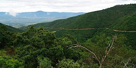 Oaxaca Birding Tour Central Valley, Highlands, Isthmus, Pacific Lowlands & Coast tickets