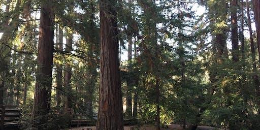 Sorrel Saturdays at Redwood Grove Nature Preserve