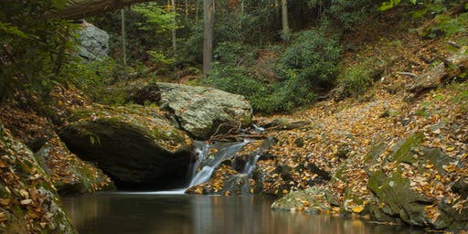 Take a Hike at Kellys Run
