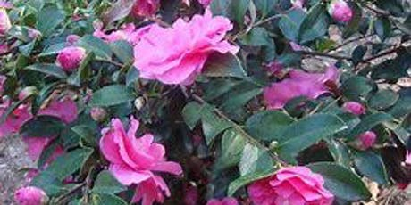 Camellias for Your Garden tickets