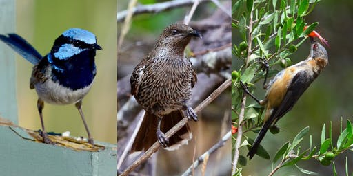 Australian Birds - their role in the landscape