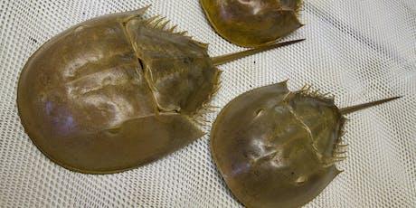 Florida Horseshoe Crab Watch – Sarasota County  tickets