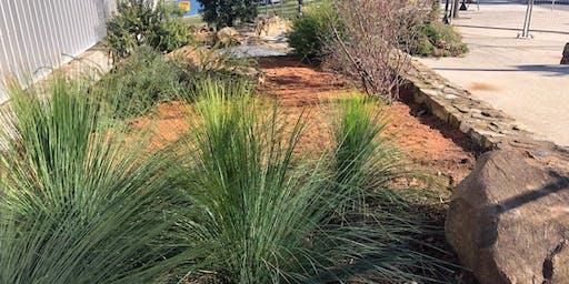 Creating a Bush Tucker Garden