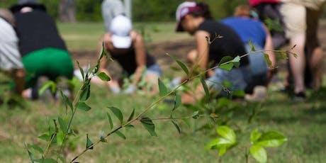 NaturallyGC Hope Island Tree Planting tickets