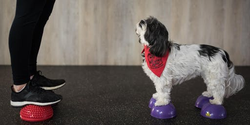 Sit Stay Squat - Workout with your Dog!