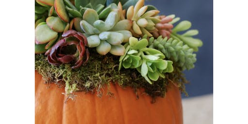 Large Succulent Pumpkin Centerpiece