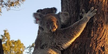 Koala Conversations tickets