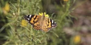 Junior Rangers Wildflower Wanderer - Great Otway National Park