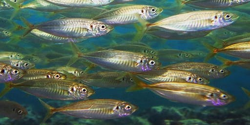 Dive Eden Social Dive - Merimbula Wharf