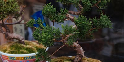 Bonsai Demonstration (Bonsai workshop by WA Bonsai Society)