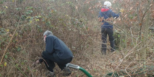 Eco-Active Day: Scrub clearance