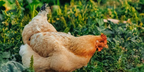 Introduction to Keeping Chickens Course / Cwrs Cyflwyniad i Gadw Ieir Adref tickets