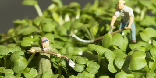 Mini Seedlings - Nature Crowns