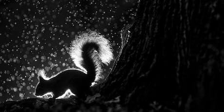 Fotoworkshop | Gute Fotos, harte Arbeit – Wege zum perfekten Naturfoto Tickets