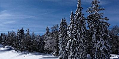 Mondschein-Schneeschuhwanderung, Spital am Pyhrn (OÖ)