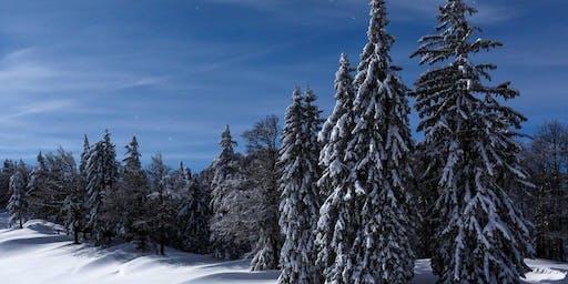 moonwalk Schneeschuh-Tour, Spital am Pyhrn (OÖ)