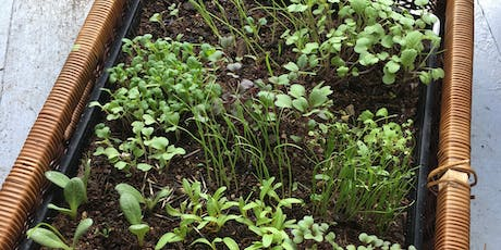 Seed Sowing Course for Beginners (Online) tickets