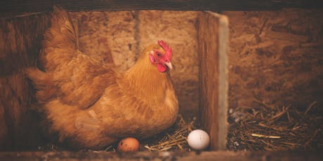 Keeping Chickens in Winter Course / Cwrs Cadw Ieir Trwy'r Gaeaf tickets