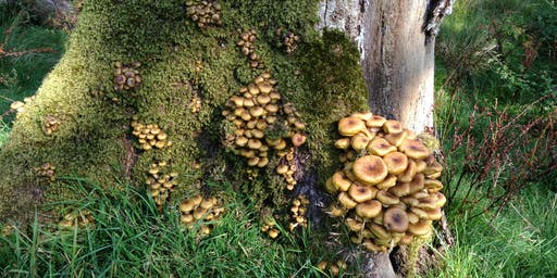 Hebden Bridge Fungi Foray