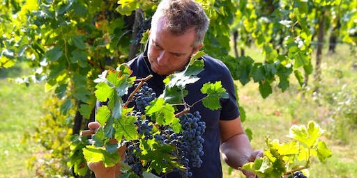Grape Harvest, Grape Stomping and lunch on the Berici Hills of Vicenza