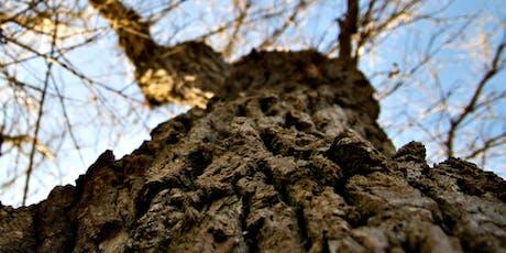 A Seasonal Guide to Tree ID tickets
