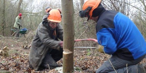 Eco-Active Day: Woodland management