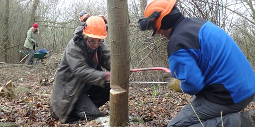 Eco-Active Day: Woodland management