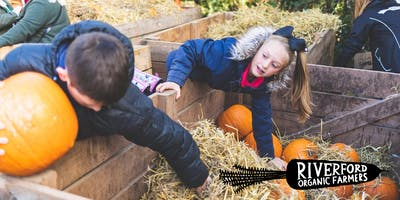 Riverford Pumpkin Day, Wash Farm, Devon