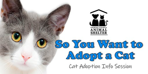 So You Want to Adopt a Cat