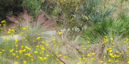 Native Plant Hike at UF/IFAS Extension Pinellas County/Florida Botanical Gardens Natural Area