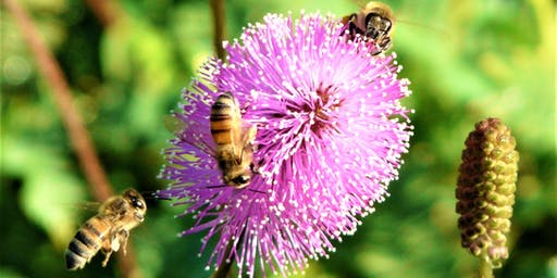 Honey Bees – All the Essentials